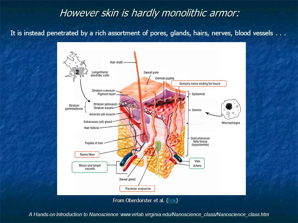 However skin is hardly monolithic armor: