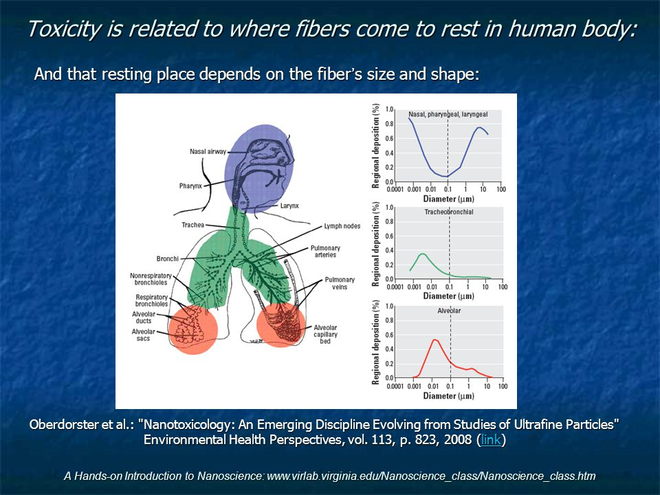 Toxicity is related to where fibers come to rest in human body: