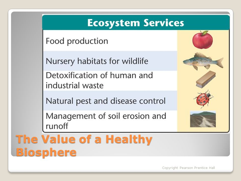 The Value of a Healthy Biosphere