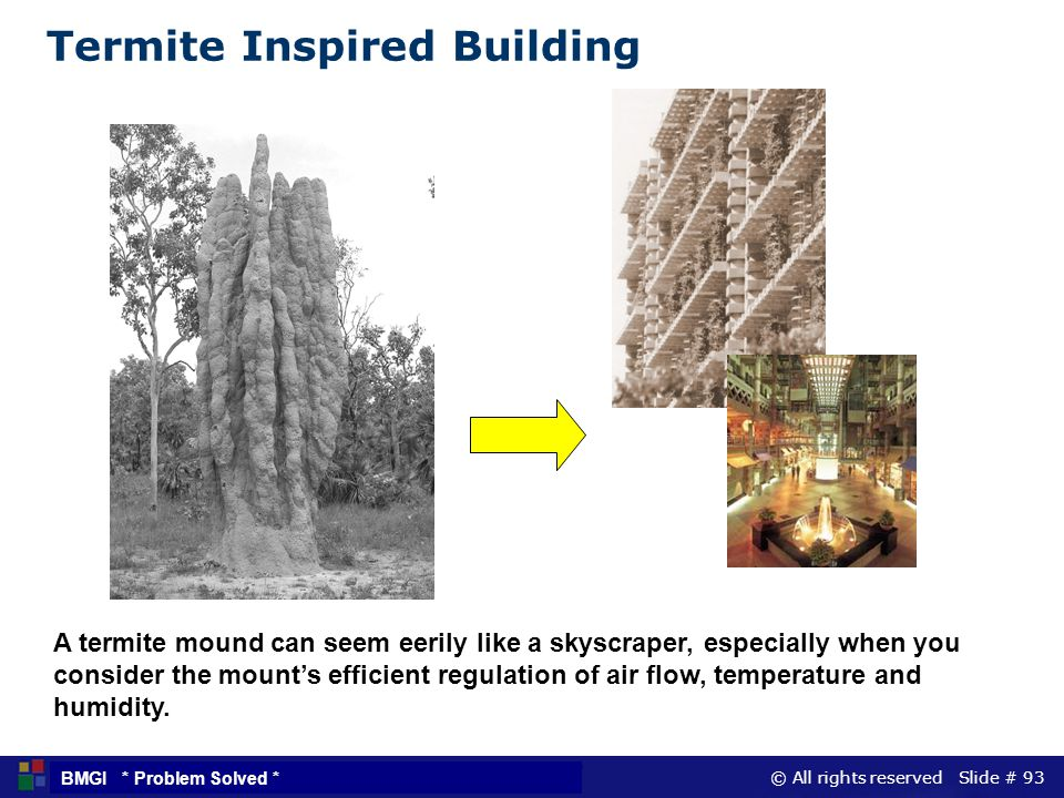 Termite Inspired Building