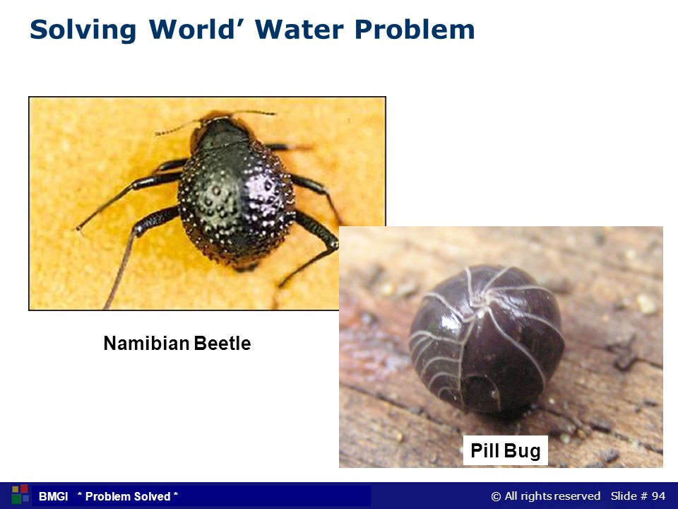 Solving World' Water Problem