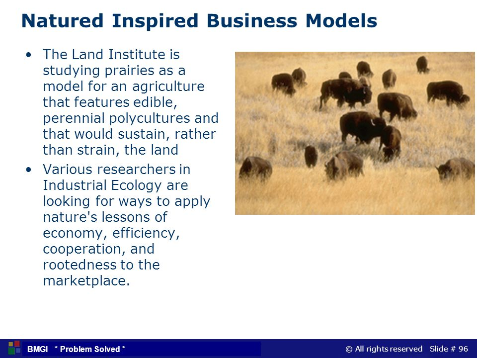 Natured Inspired Business Models
