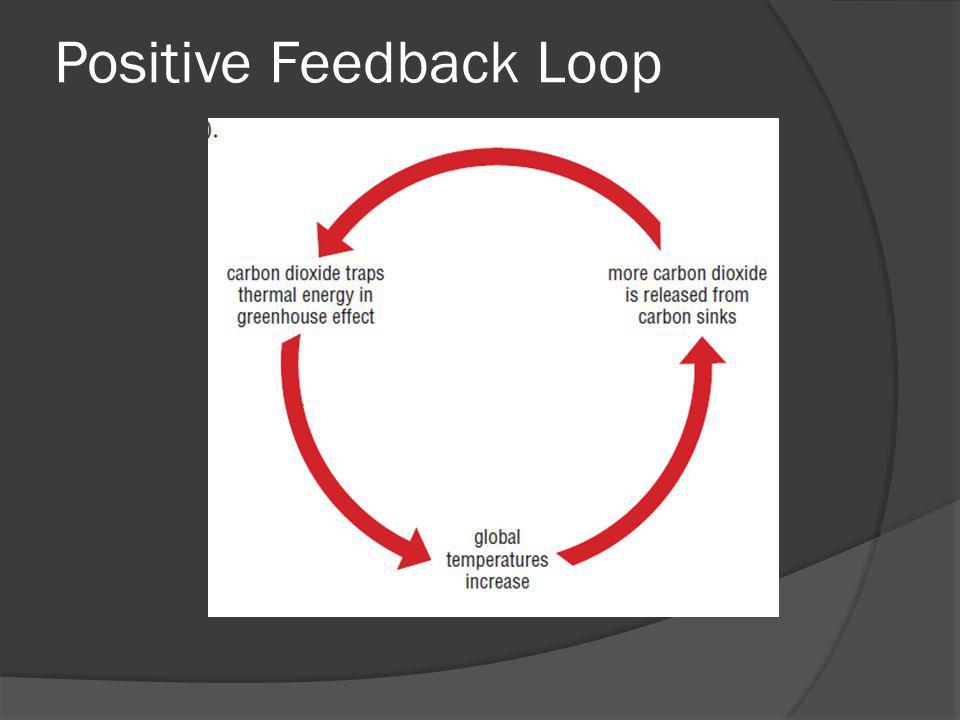 Positive Feedback Loop
