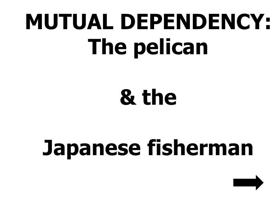MUTUAL DEPENDENCY: The pelican & the Japanese fisherman