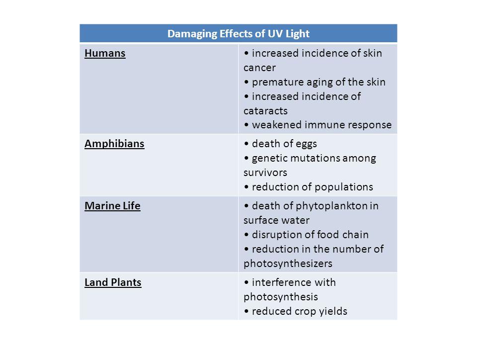 Damaging Effects of UV Light
