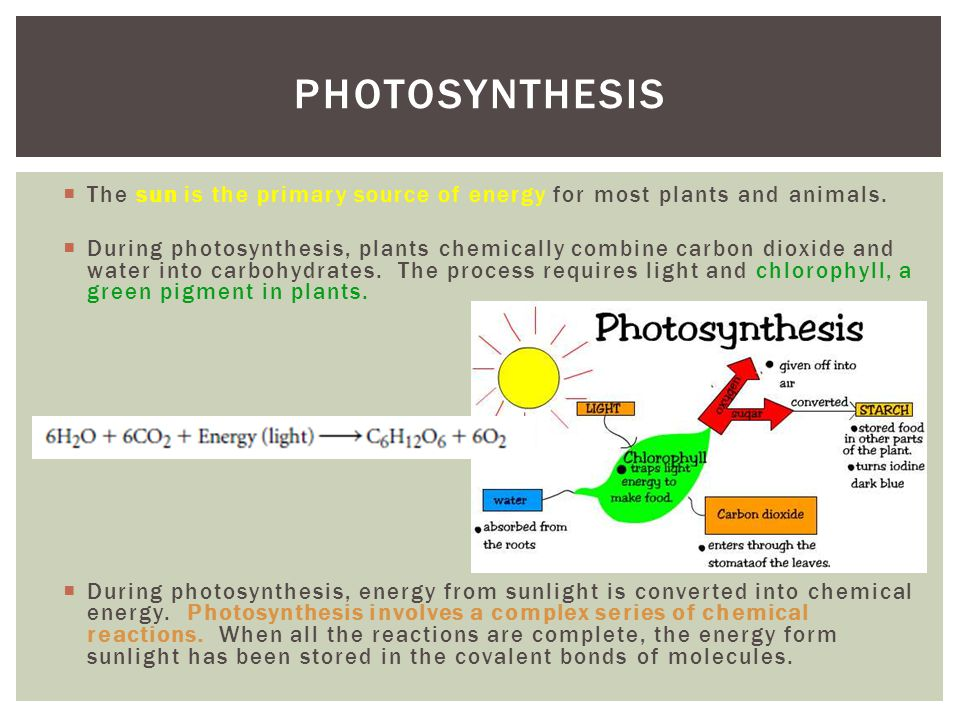 Photosynthesis The sun is the primary source of energy for most plants and animals.