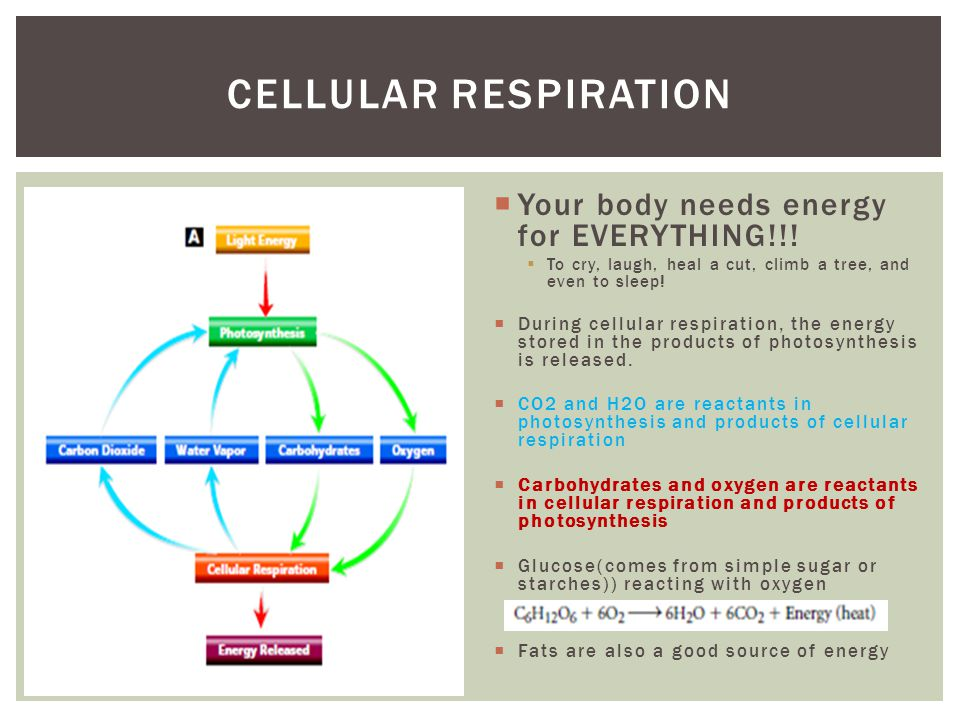 Cellular Respiration Your body needs energy for EVERYTHING!!!
