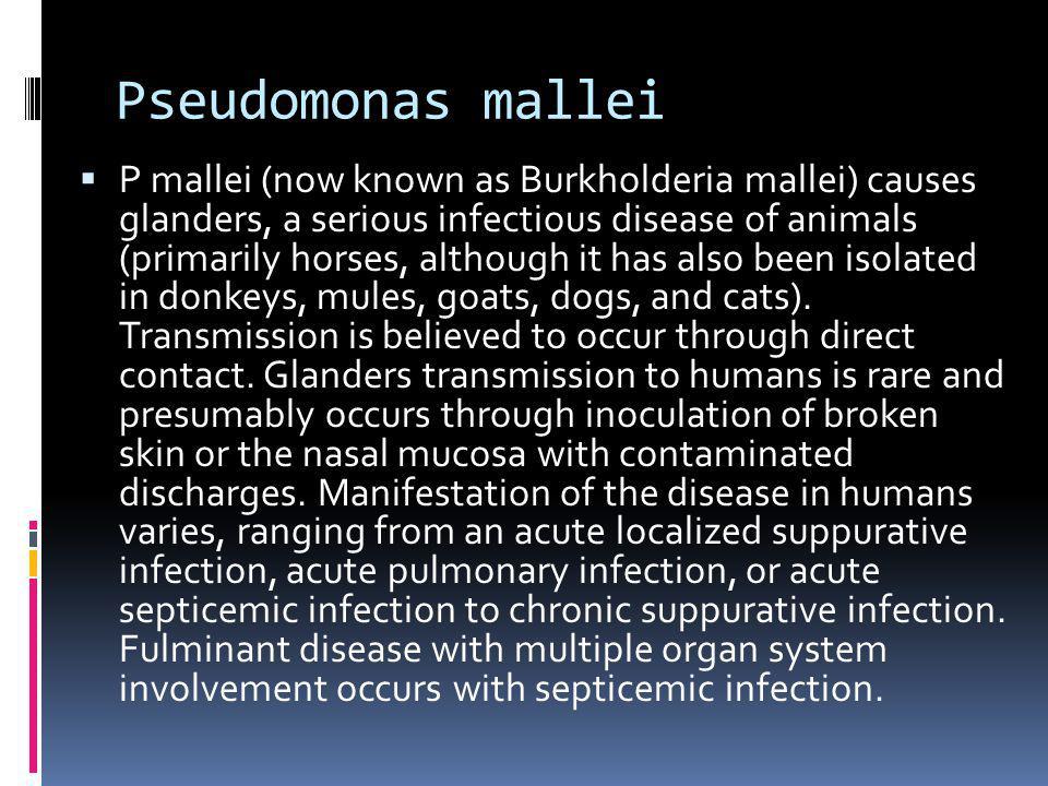 Pseudomonas mallei