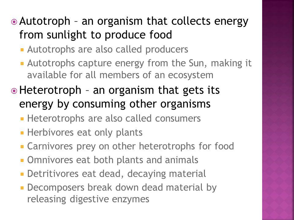 Autotroph – an organism that collects energy from sunlight to produce food