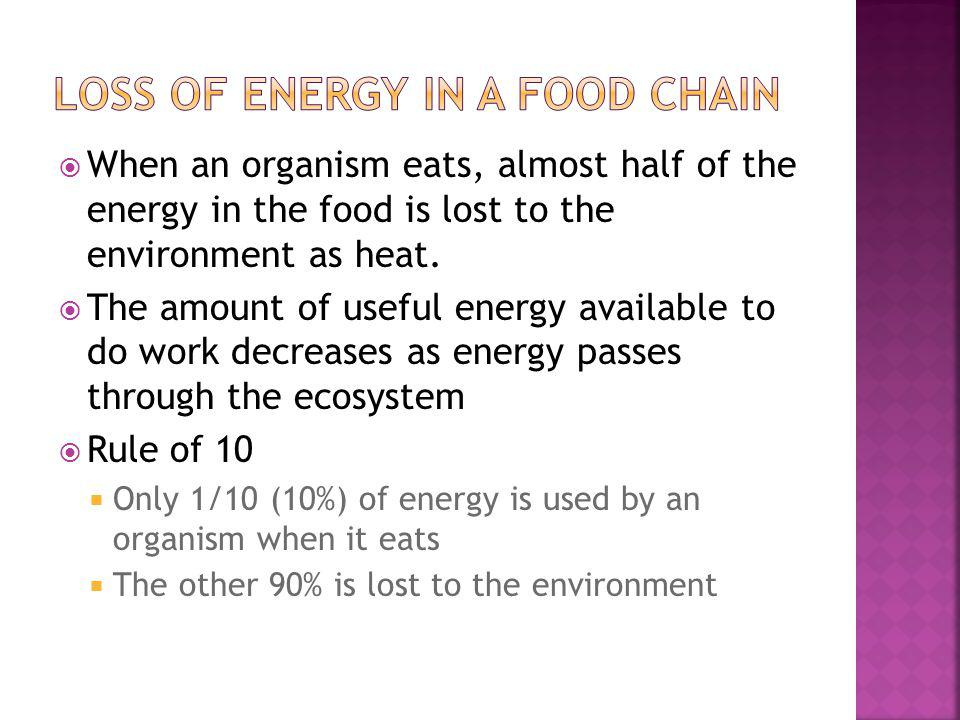 Loss of energy in a food chain