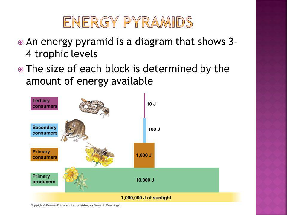 Energy Pyramids An energy pyramid is a diagram that shows 3- 4 trophic levels.