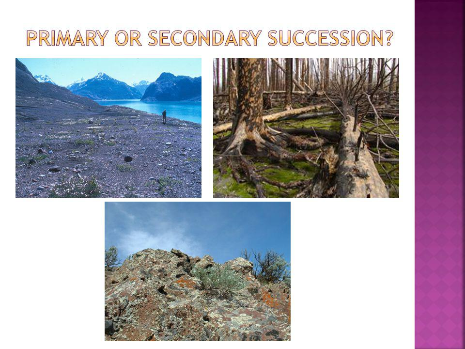 Primary or secondary succession
