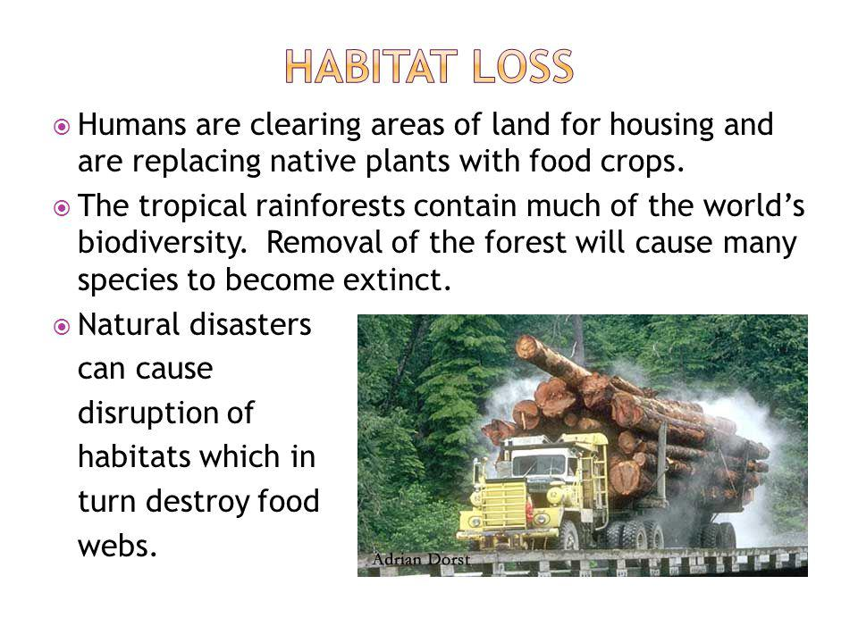 Habitat loss Humans are clearing areas of land for housing and are replacing native plants with food crops.