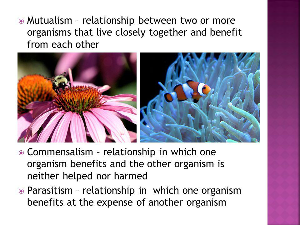 Mutualism – relationship between two or more organisms that live closely together and benefit from each other
