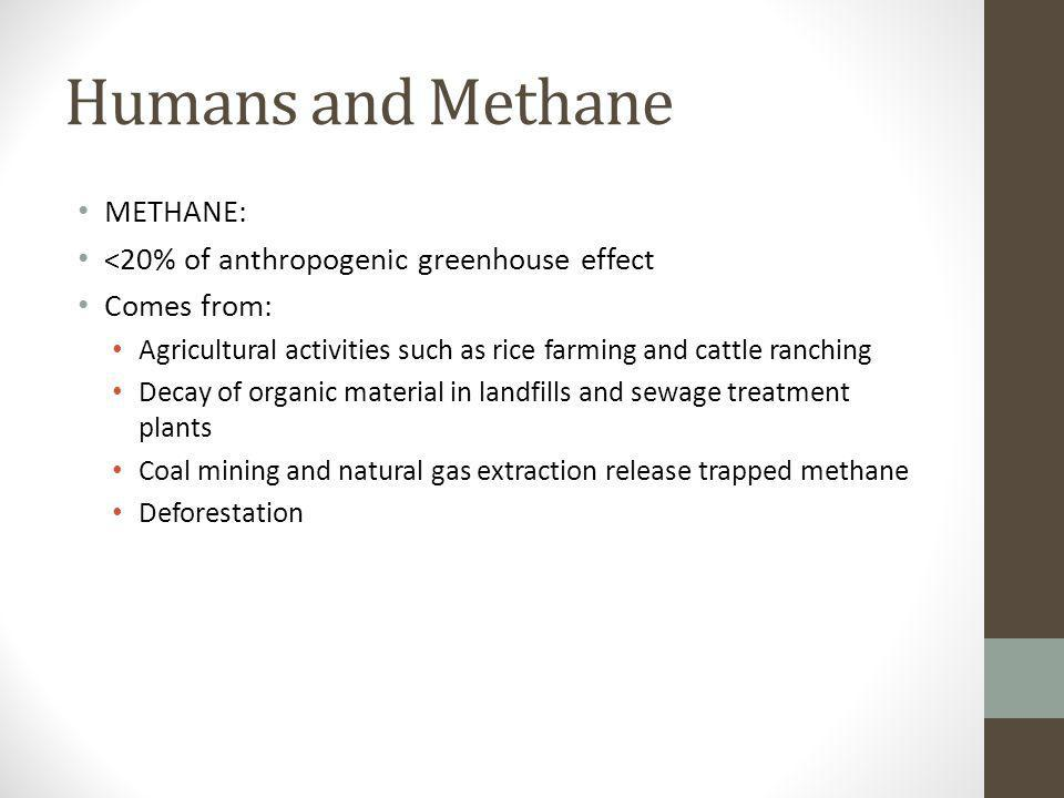 Humans and Methane METHANE: <20% of anthropogenic greenhouse effect