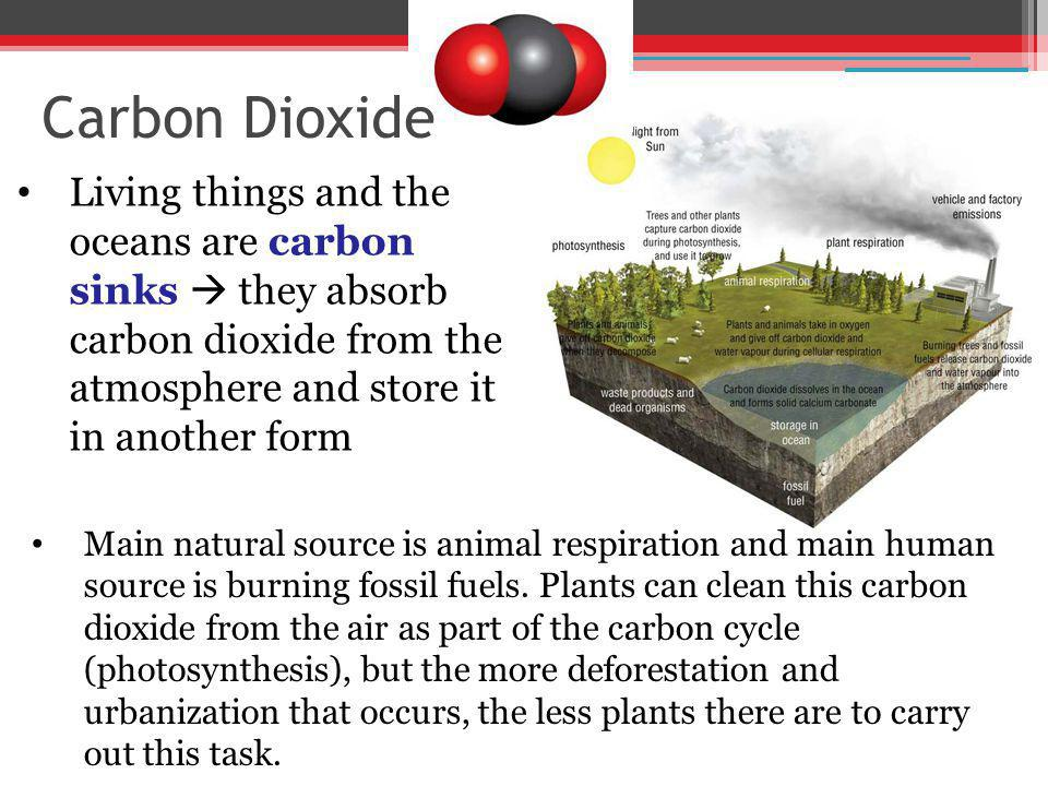 Carbon Dioxide Living things and the oceans are carbon sinks  they absorb carbon dioxide from the atmosphere and store it in another form.