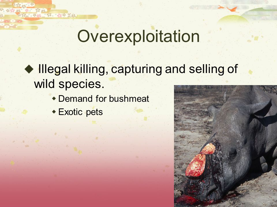 Overexploitation Illegal killing, capturing and selling of wild species.