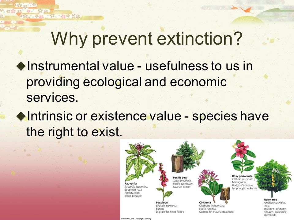 Why prevent extinction