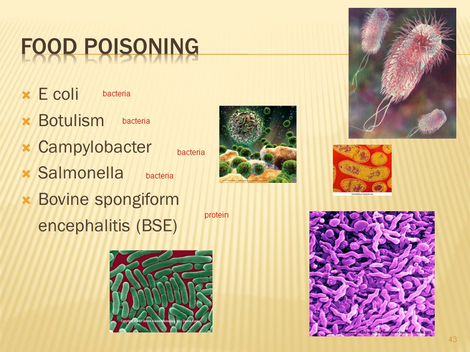 Food poisoning E coli Botulism Campylobacter Salmonella