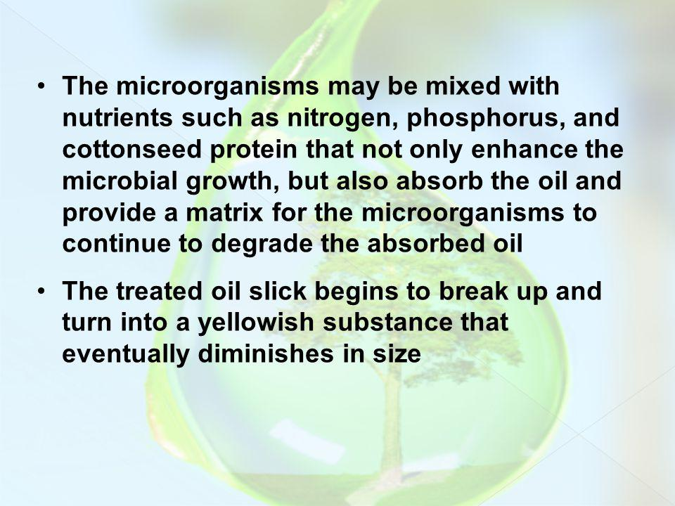 The microorganisms may be mixed with nutrients such as nitrogen, phosphorus, and cottonseed protein that not only enhance the microbial growth, but also absorb the oil and provide a matrix for the microorganisms to continue to degrade the absorbed oil