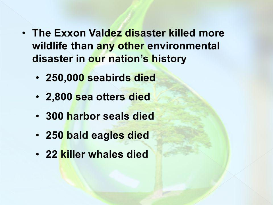 The Exxon Valdez disaster killed more wildlife than any other environmental disaster in our nation's history
