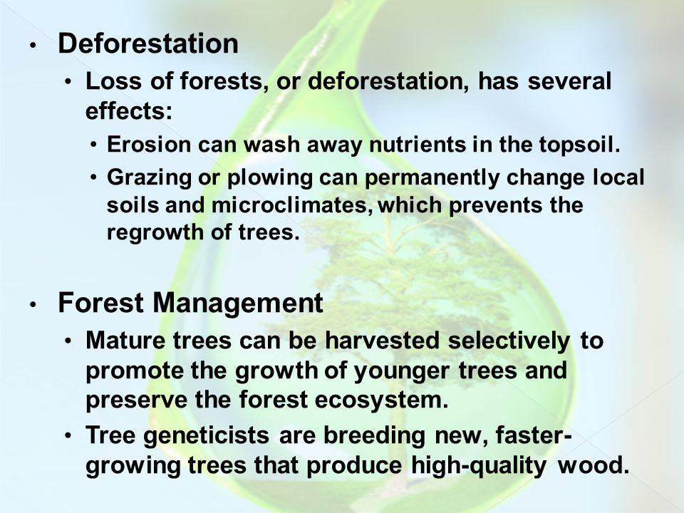 Deforestation Forest Management