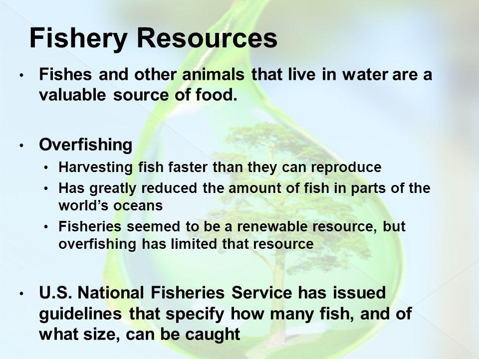 Fishery Resources Fishes and other animals that live in water are a valuable source of food. Overfishing