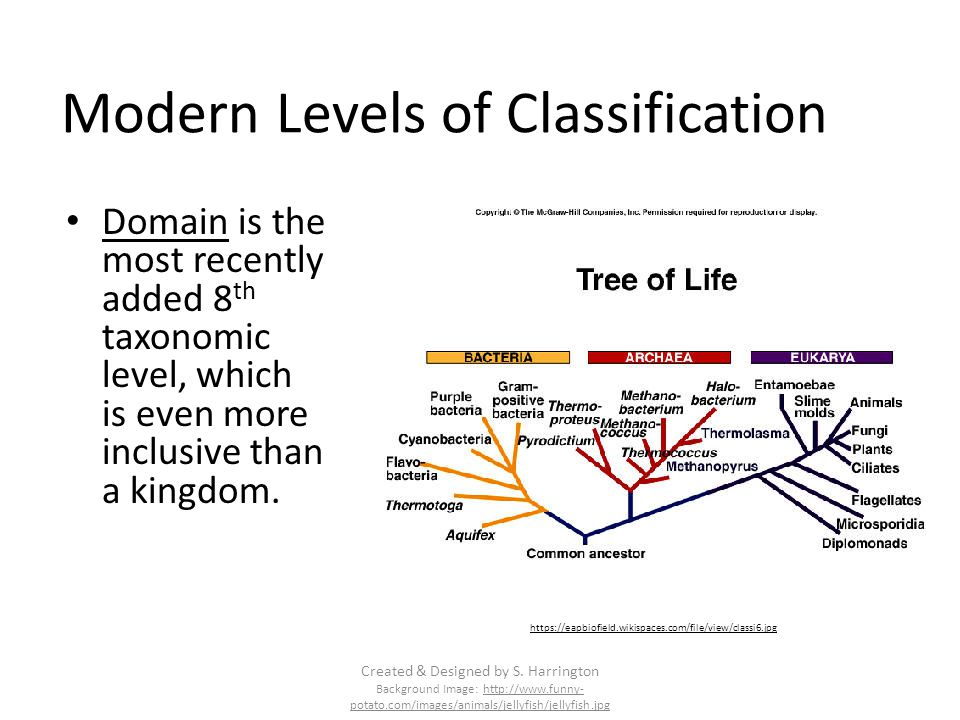 Modern Levels of Classification