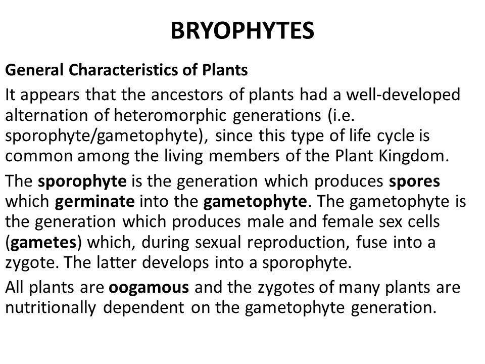 BRYOPHYTES General Characteristics of Plants.