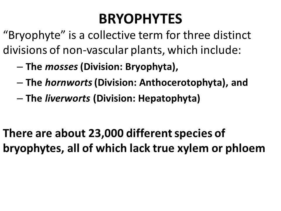 BRYOPHYTES Bryophyte is a collective term for three distinct divisions of non-vascular plants, which include: