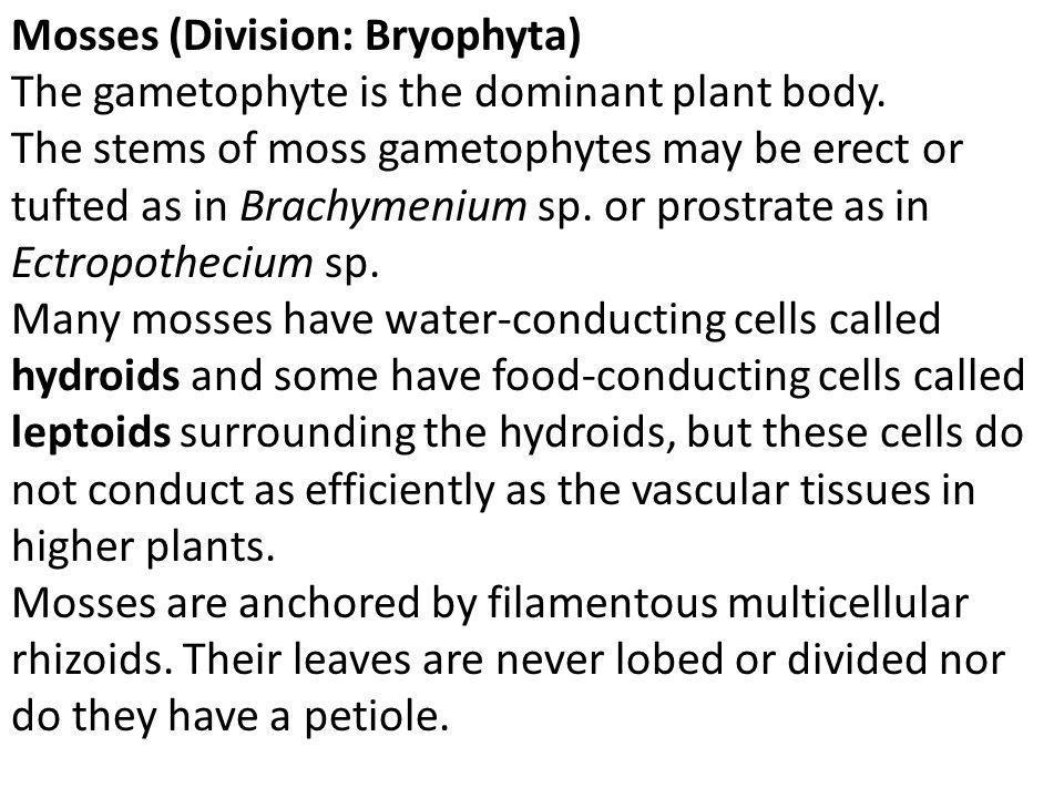 Mosses (Division: Bryophyta)