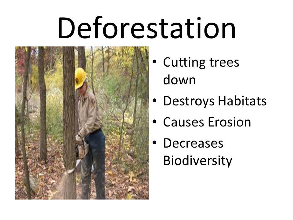 Deforestation Cutting trees down Destroys Habitats Causes Erosion