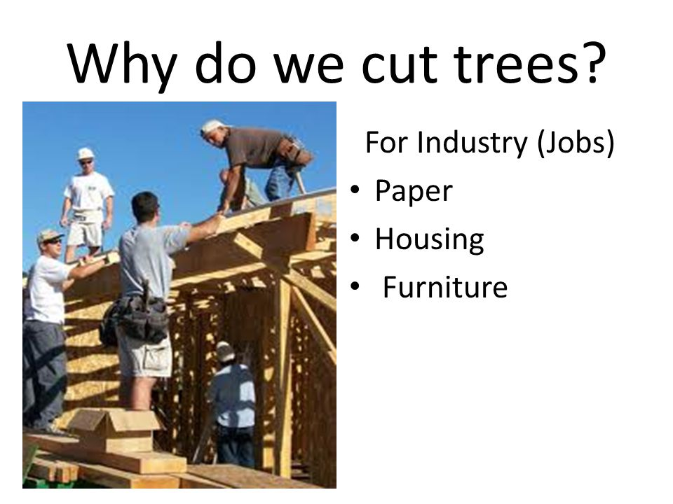 Why do we cut trees For Industry (Jobs) Paper Housing Furniture