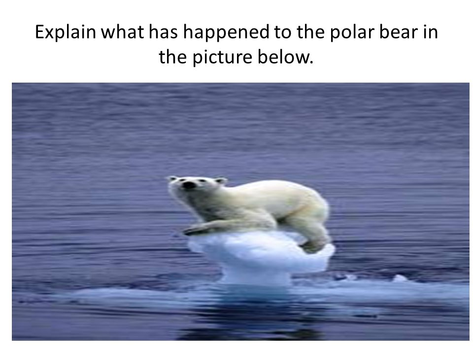 Explain what has happened to the polar bear in the picture below.