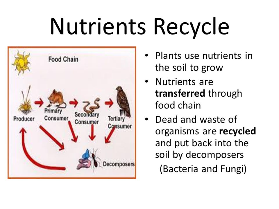 Nutrients Recycle Plants use nutrients in the soil to grow