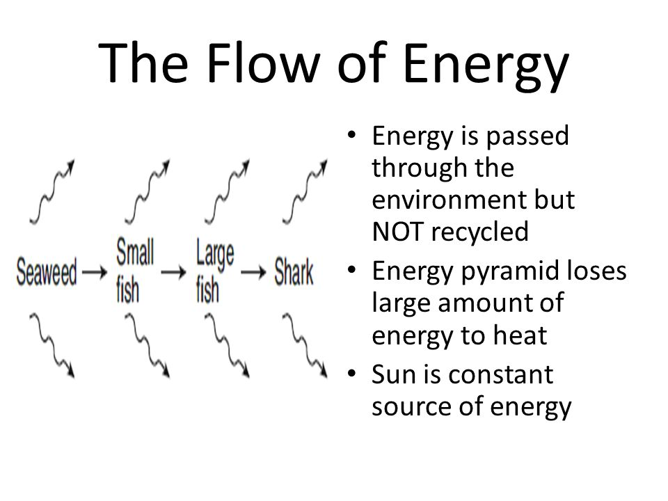 The Flow of Energy Energy is passed through the environment but NOT recycled. Energy pyramid loses large amount of energy to heat.