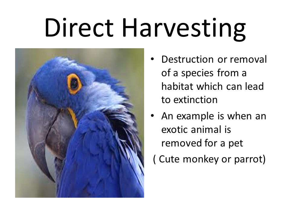 Direct Harvesting Destruction or removal of a species from a habitat which can lead to extinction.