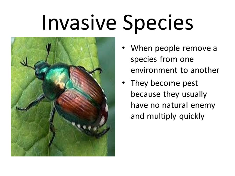 Invasive Species When people remove a species from one environment to another.