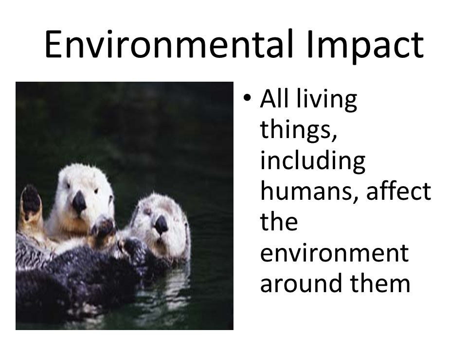Environmental Impact All living things, including humans, affect the environment around them