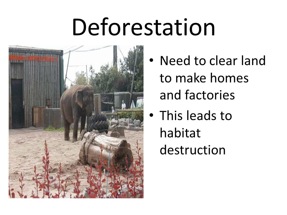 Deforestation Need to clear land to make homes and factories