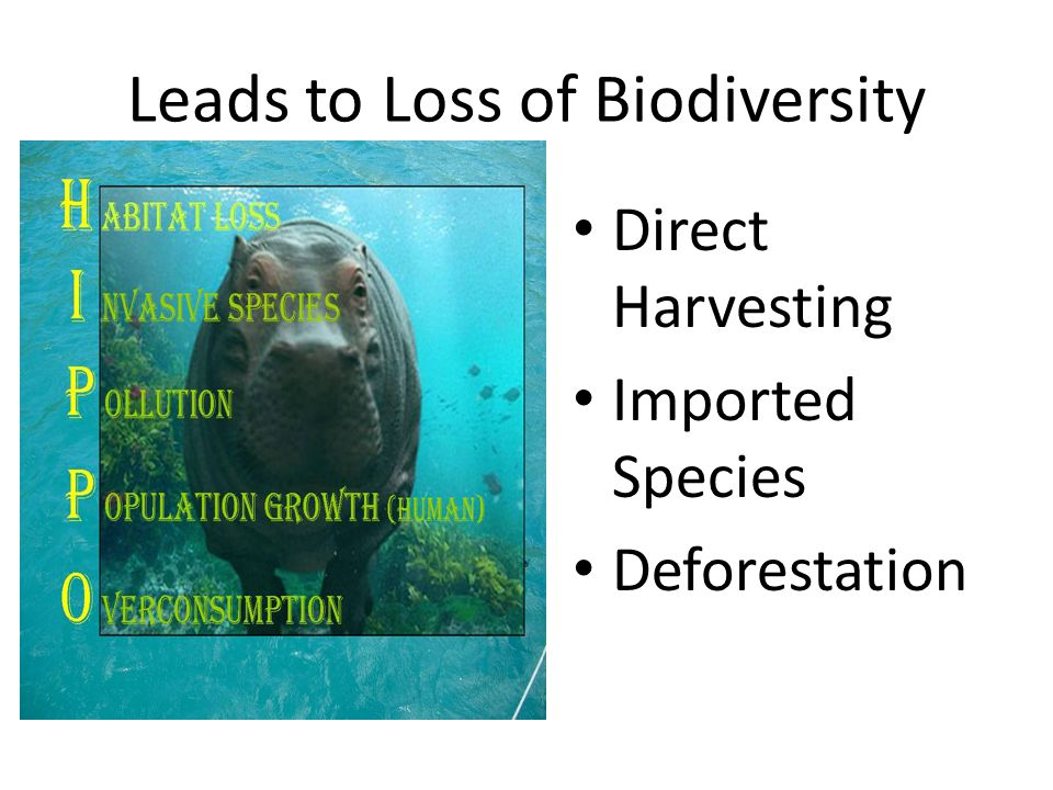 Leads to Loss of Biodiversity