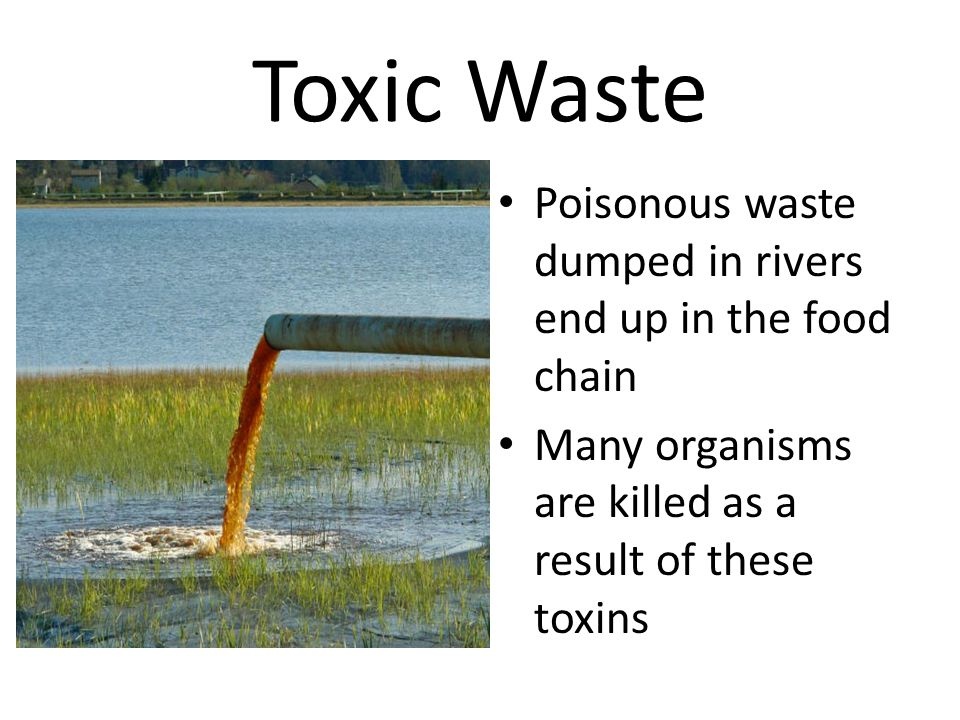 Toxic Waste Poisonous waste dumped in rivers end up in the food chain