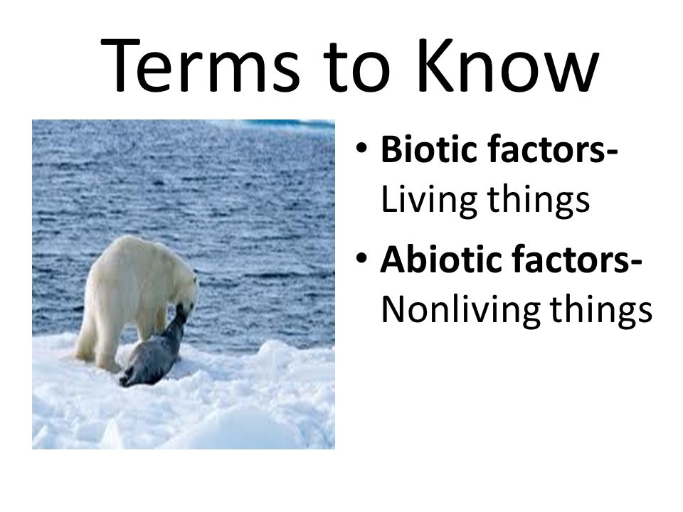 Terms to Know Biotic factors- Living things