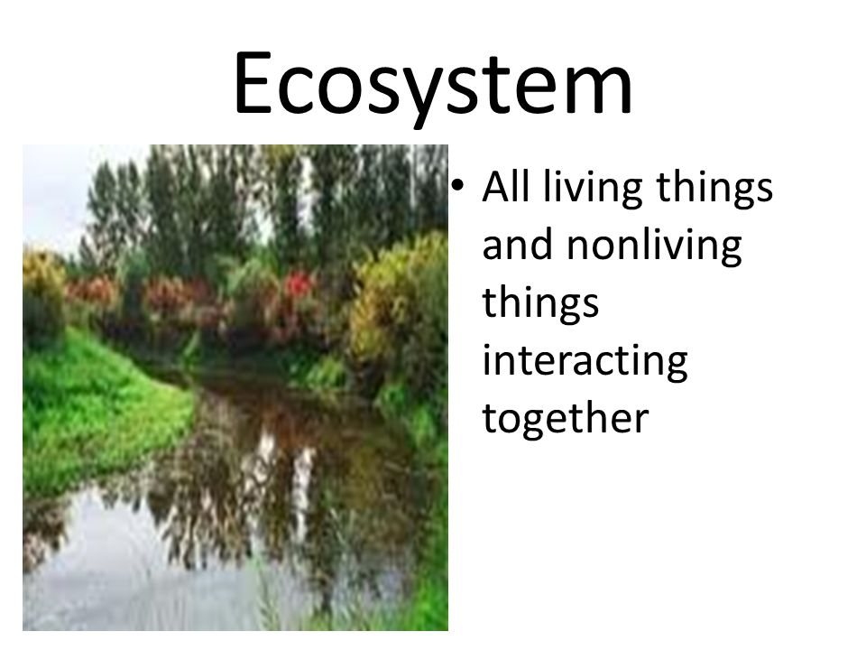 Ecosystem All living things and nonliving things interacting together