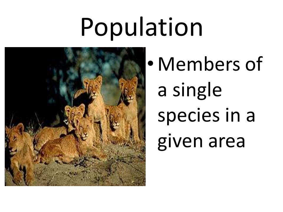 Population Members of a single species in a given area