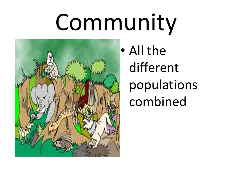 Community All the different populations combined