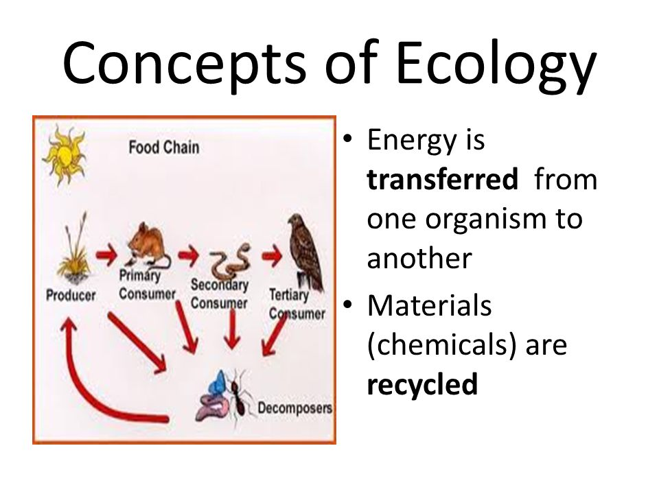 Concepts of Ecology Energy is transferred from one organism to another