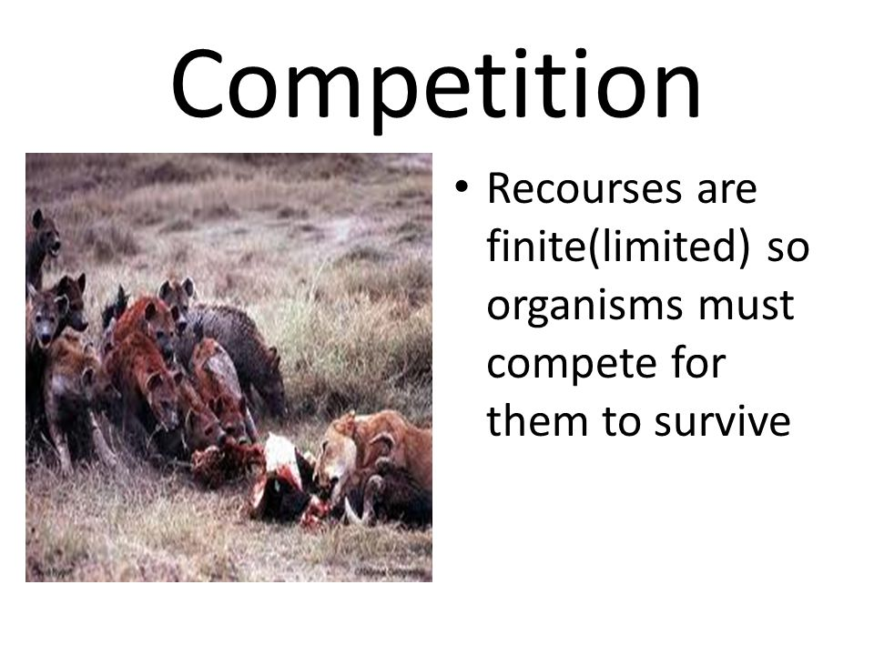 Competition Recourses are finite(limited) so organisms must compete for them to survive