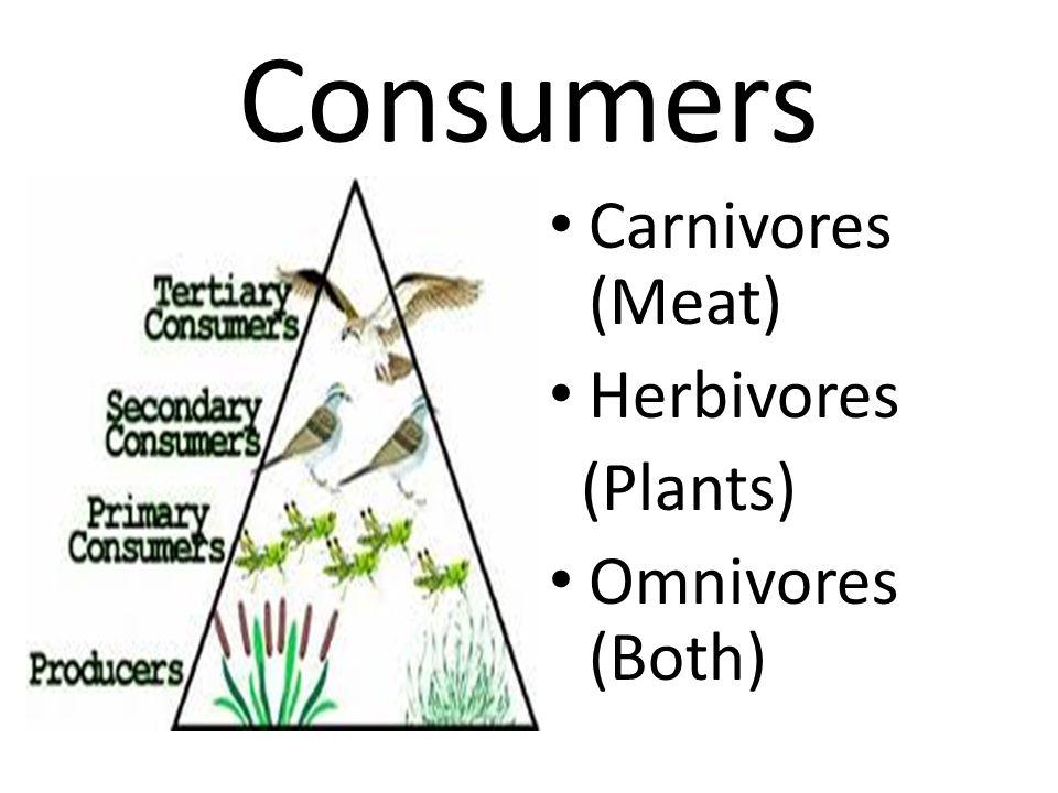 Consumers Carnivores (Meat) Herbivores (Plants) Omnivores (Both)