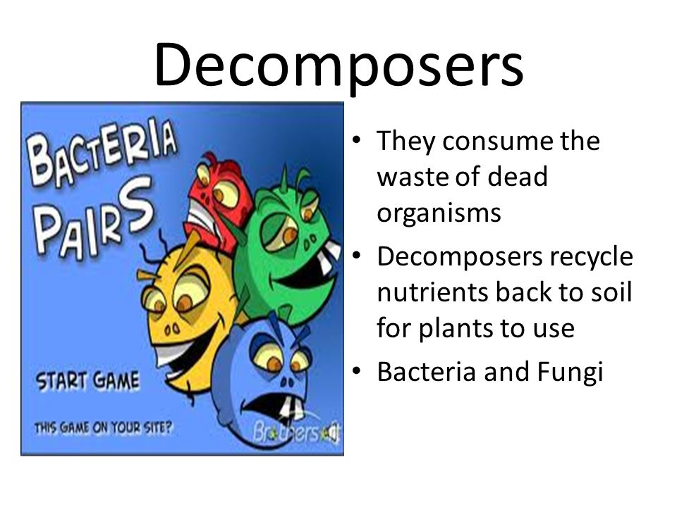 Decomposers They consume the waste of dead organisms